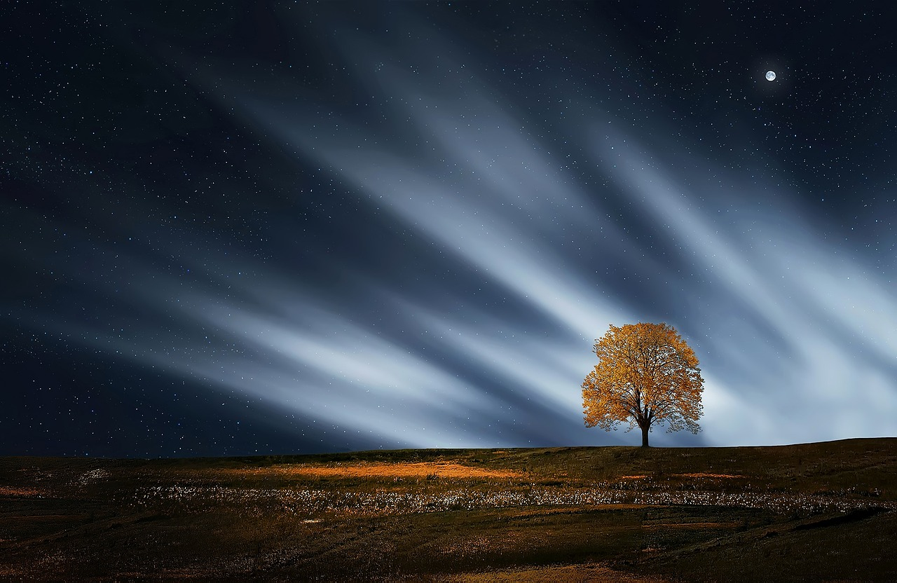 Обои на рабочий стол Дерево и звёздное небо