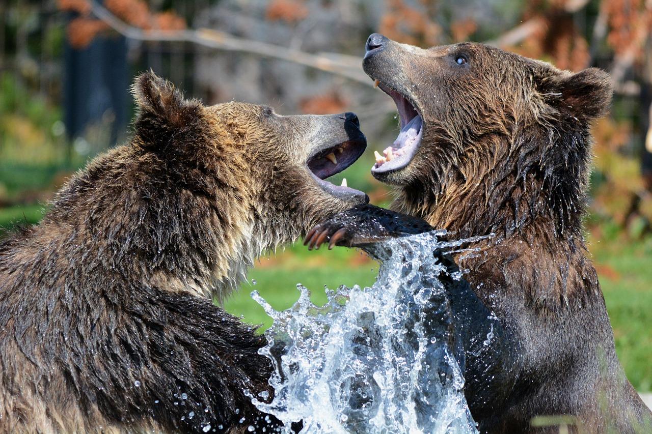 Смешные медвежатки весело играют