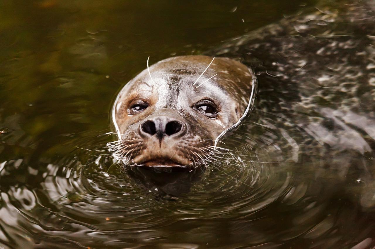Вылезает из воды смешная мордочка