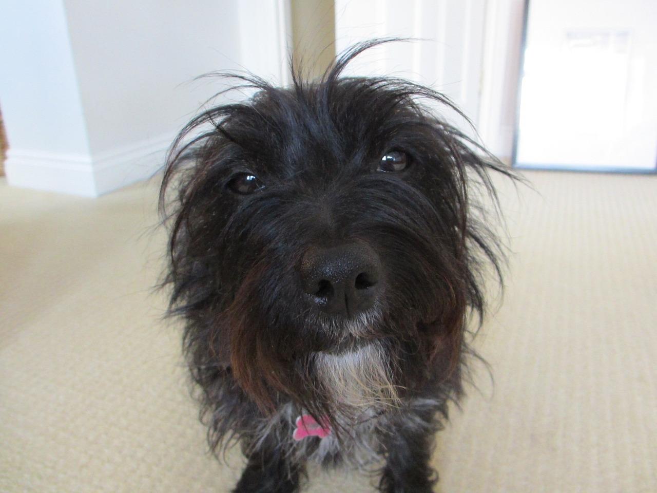Забавная причёска у собаки