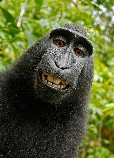 Деловая обезьяна